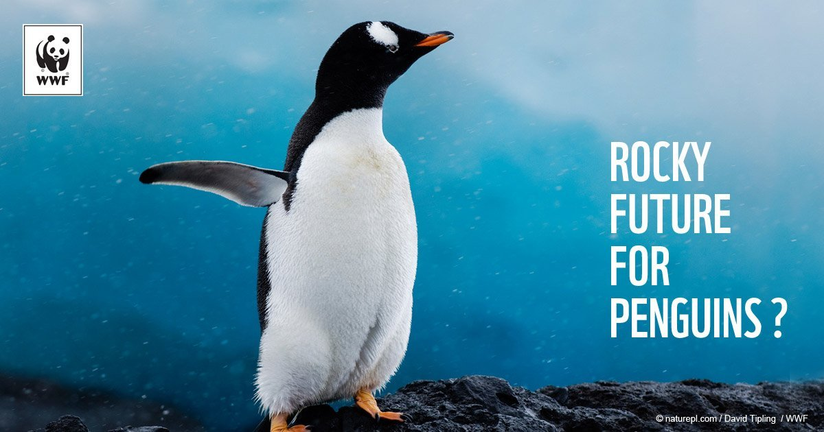 penguins - Magazine cover